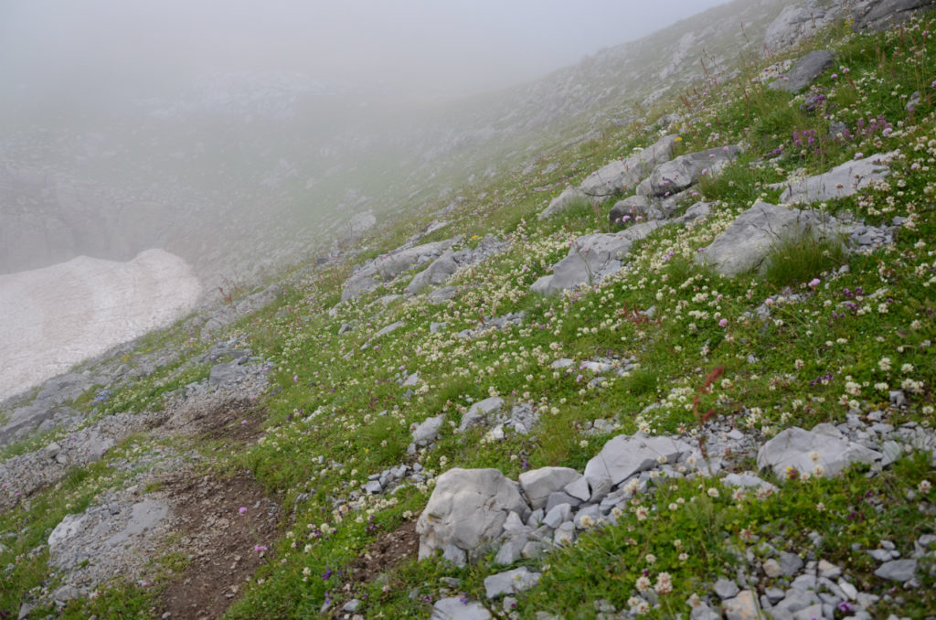 Zla Kolata - Łąka pod szczytem