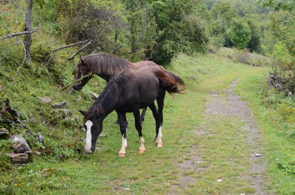 Zla Kolata - konie na szlaku