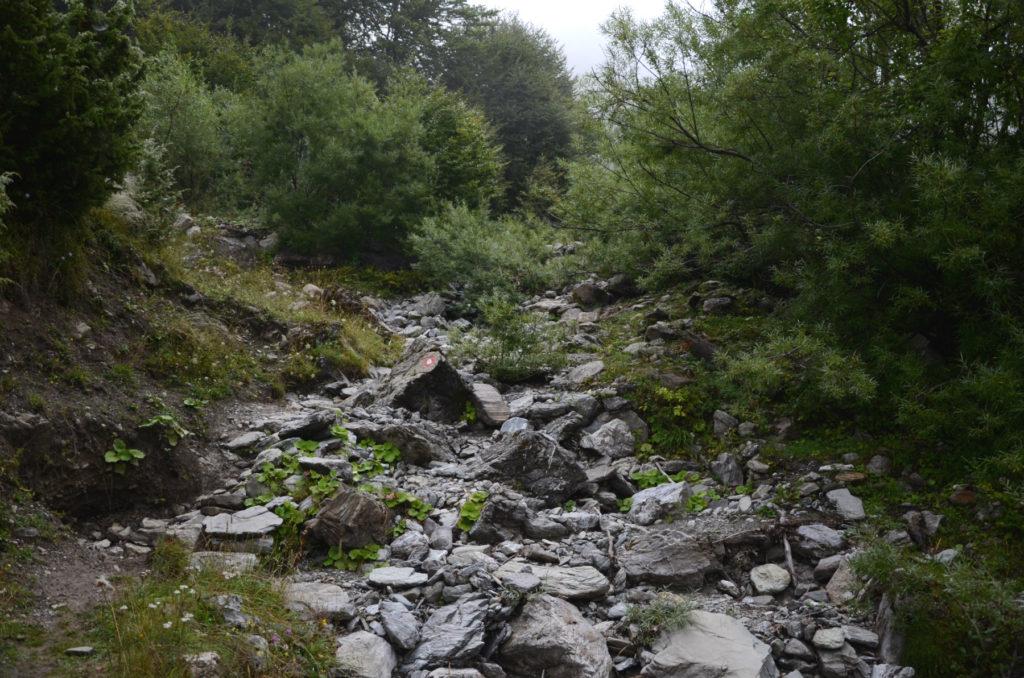 Zla Kolata - zarośnięty szlak