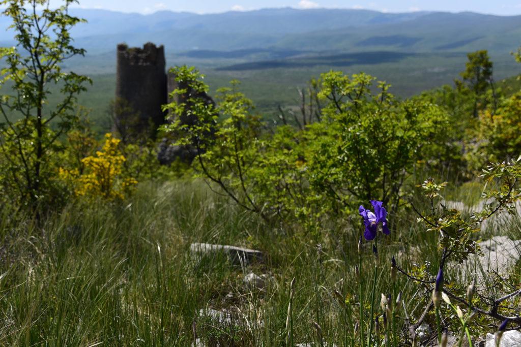 Szlak na Vrh Dinare - dziki irys