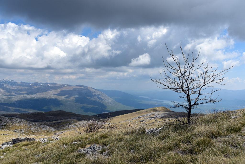 Samotne drzewo przy szlaku na Vrh Dinare