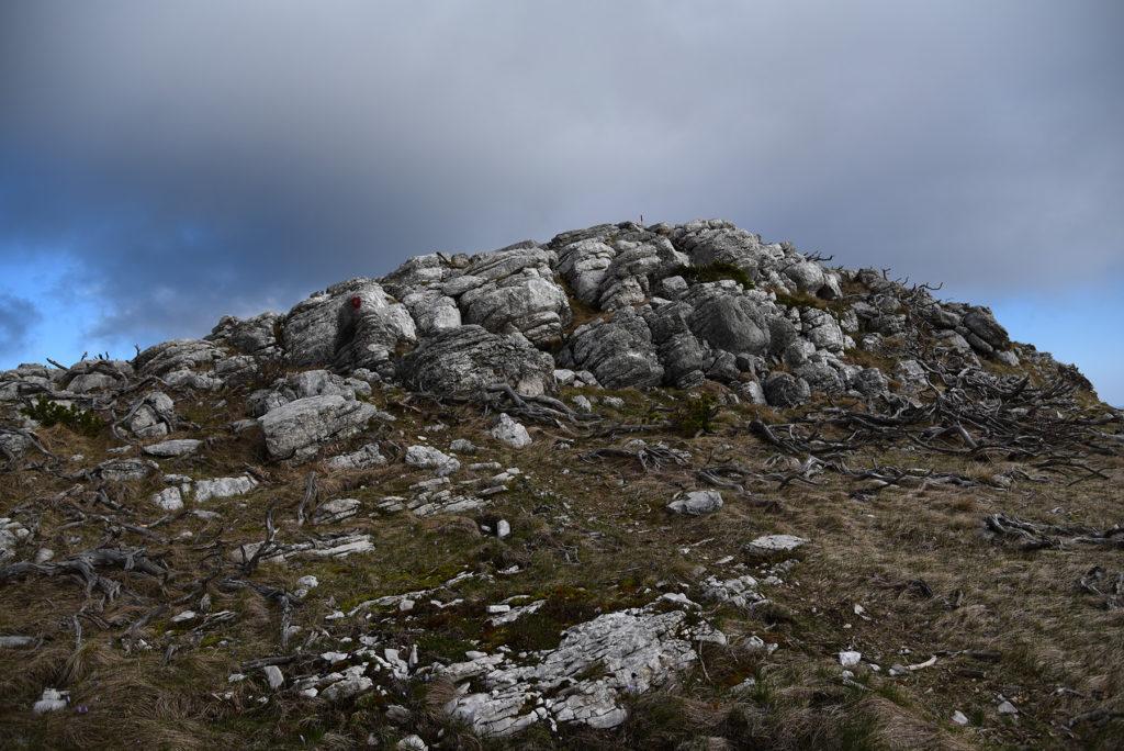Vrh Dinare - skały z kosodrzewiną