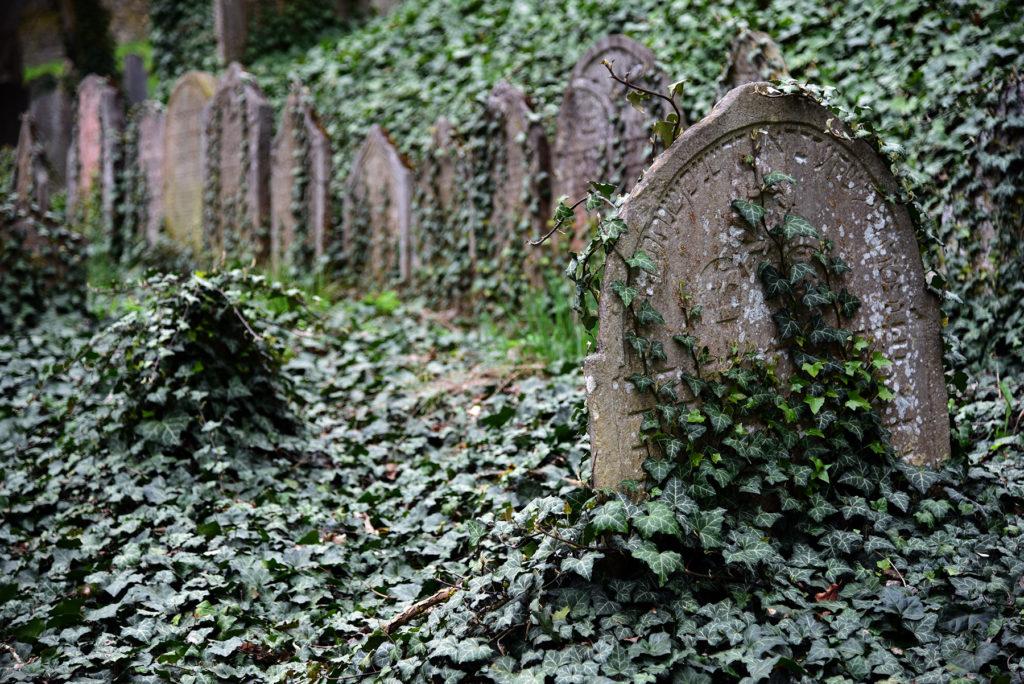 Třebíč - Cmentarz Żydowski - zarośnięty nagrobek