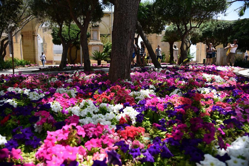 Valletta - Górne Ogrody Barrakka - rabata kwiatowa
