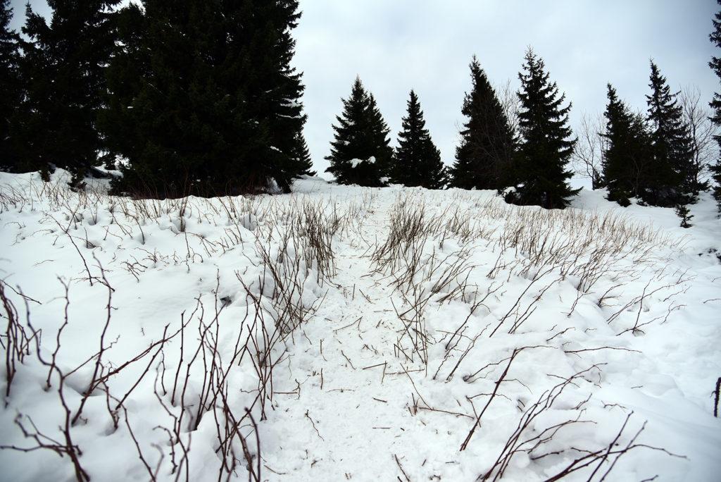 Howerla - ścieżka wśród traw i niskich krzewów