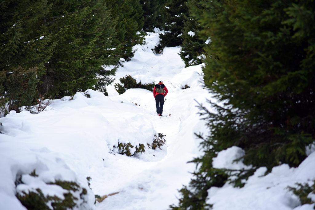 Howerla - niebieski szlak wśród kosodrzewin
