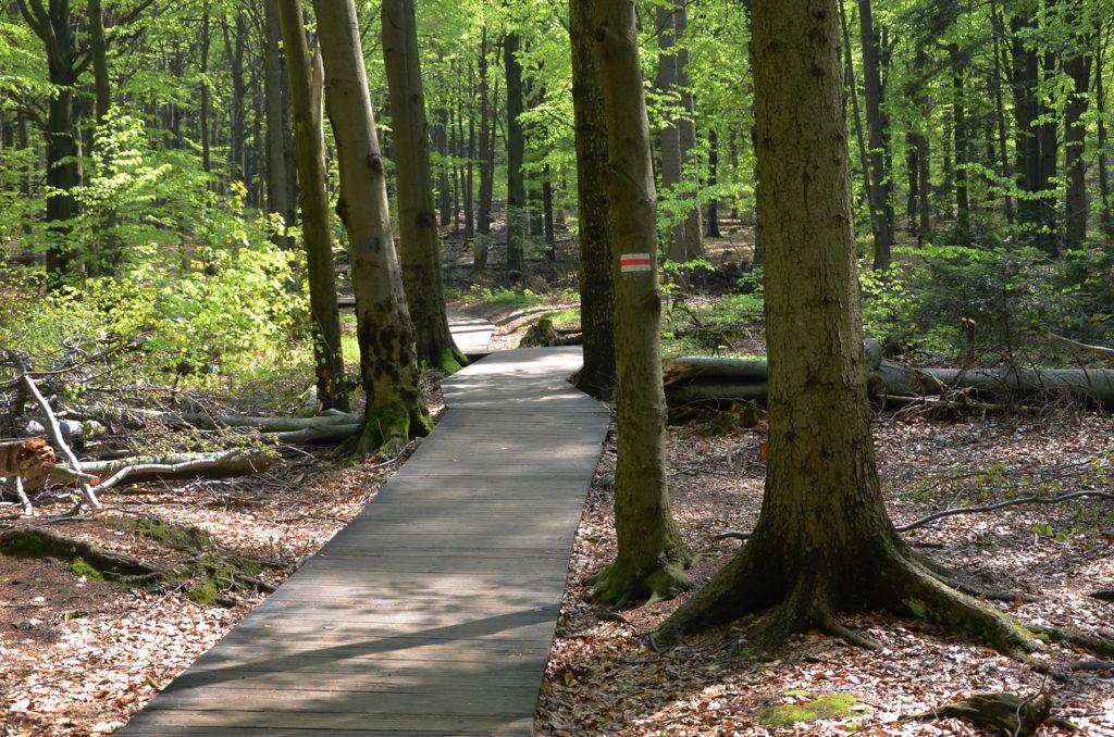 Drewniana ścieżka - czerwony szlak na Łysicę