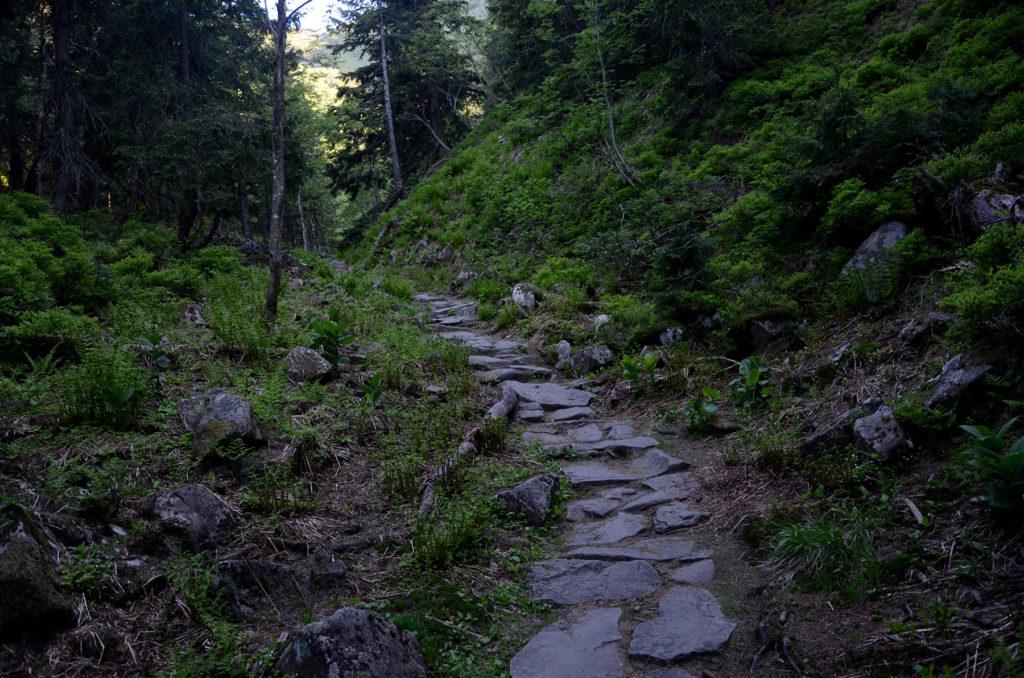 Kamienny żółty szlak przed wyjściem z lasu w stronę szczytu Babiej Góry