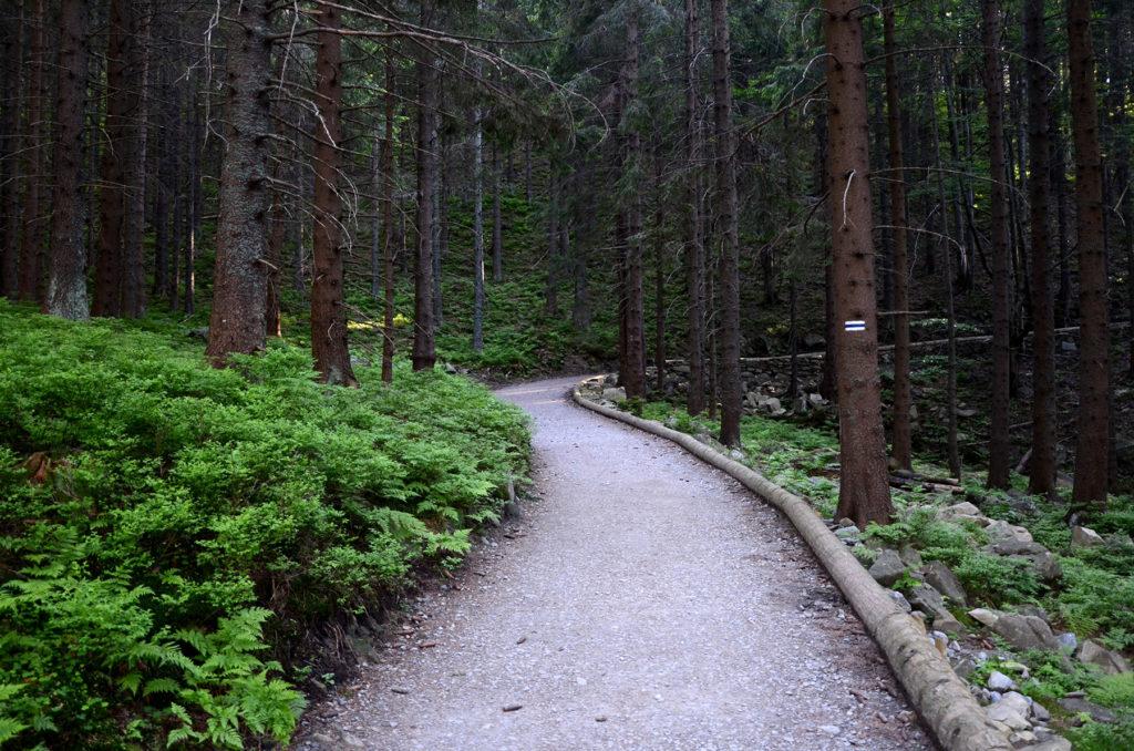 Niebieski szlak w stronę Schroniska Markowe Szczawiny