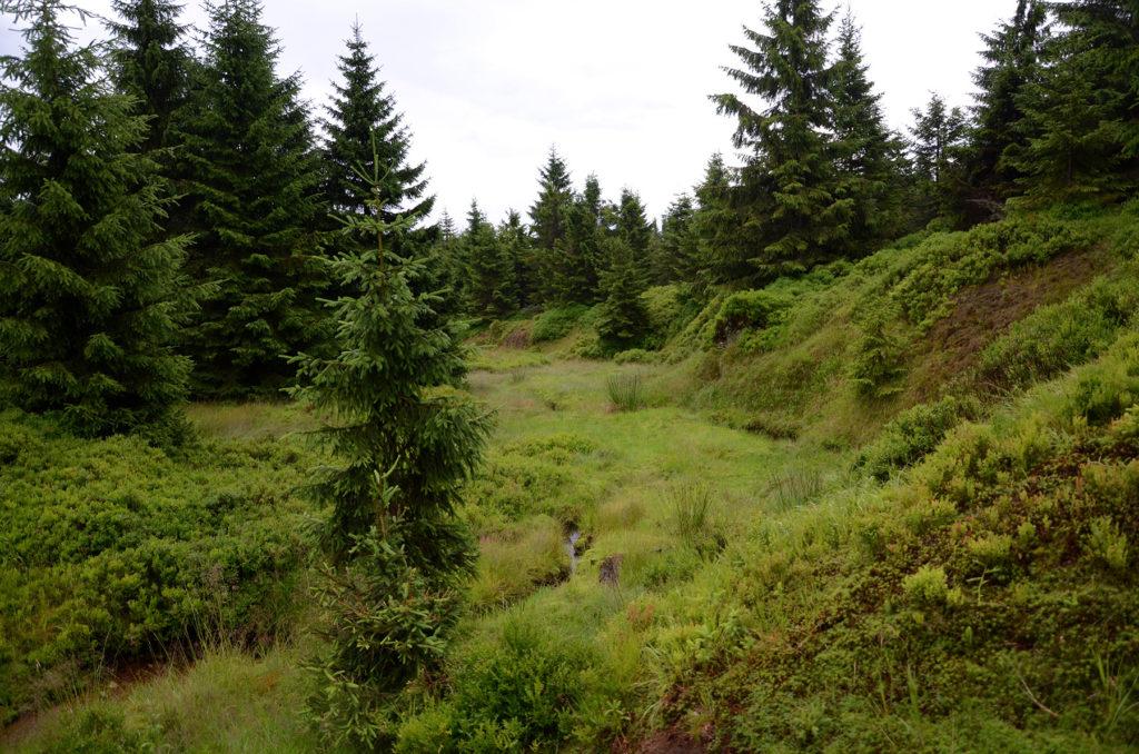 Podmokła łąka górska przy czerwonym szlaku na Wysoką Kopę