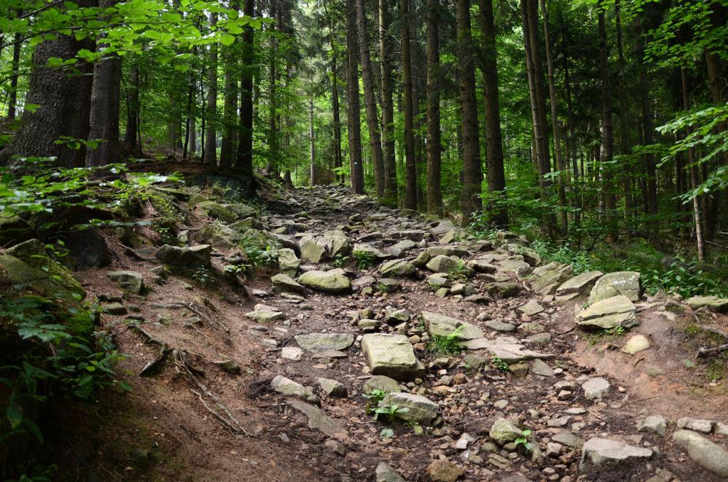 Zielony szlak do Zamku Bolczów