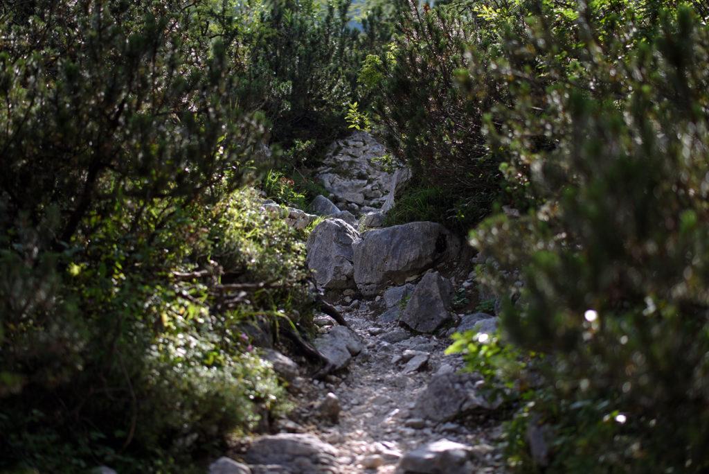 Kamieniste podejście pomiędzy kosodrzewiną - szlak na Triglav