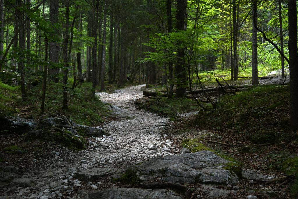 Początek szlaku na Triglav z Doliny Krma