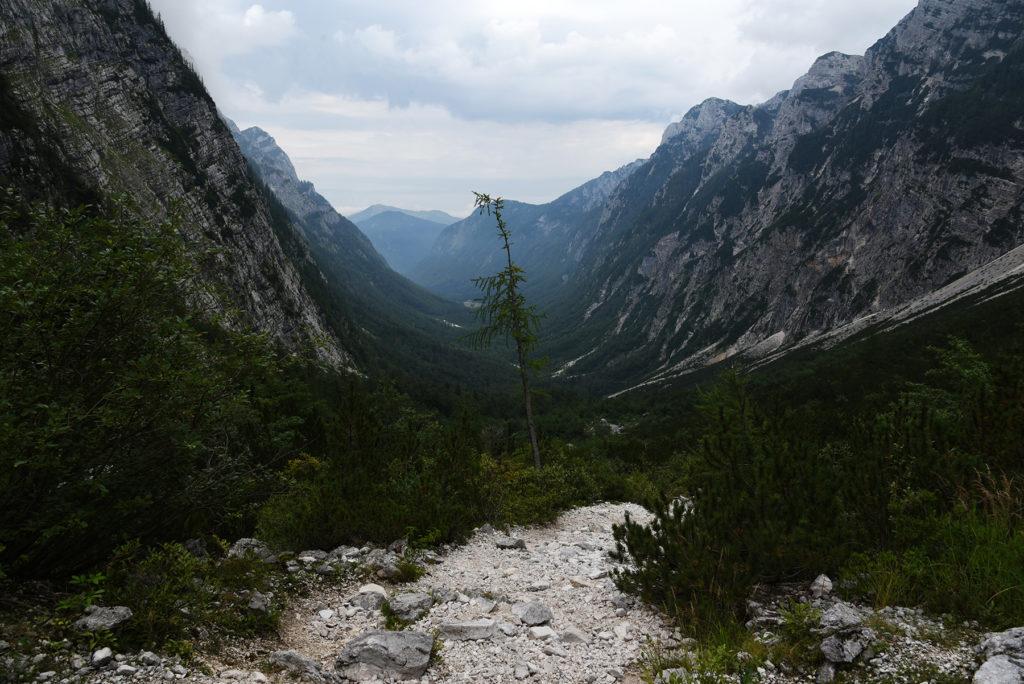 Widok na Dolinę Krma z modrzewiem w centrum